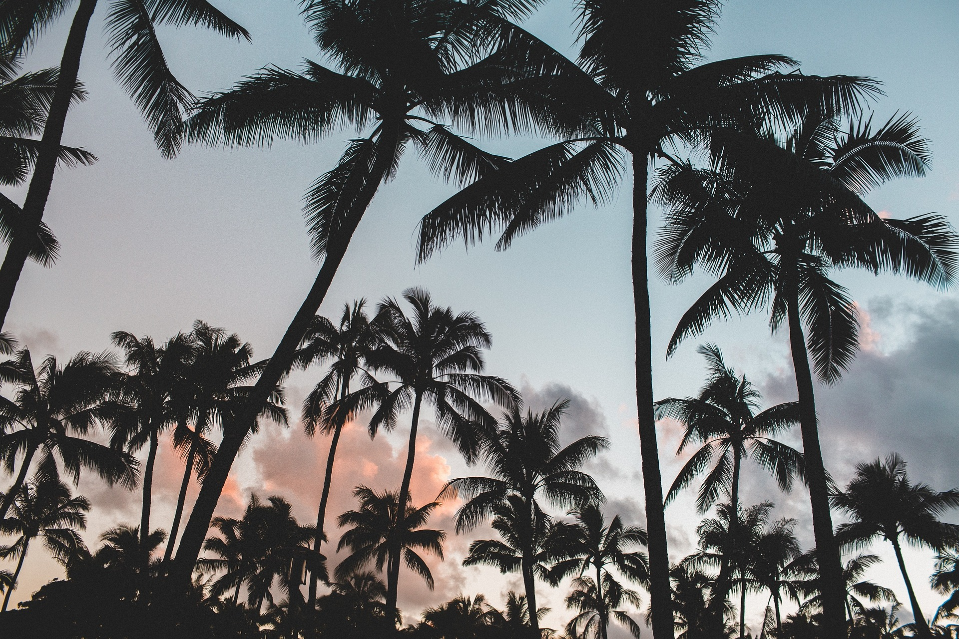 coconut palm trees in sunset sky image